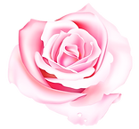 pink-rose-vector-650401_edited_edited_ed