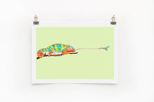 Chameleon A4 Print