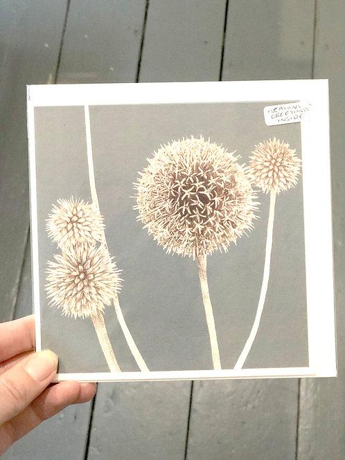"Allium Card saying ""Season Greetings"" inside"