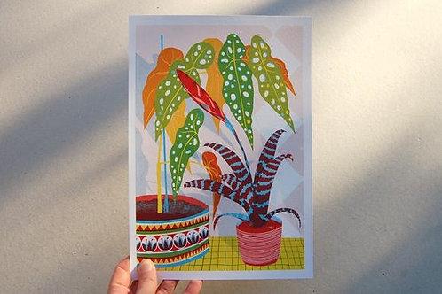 Bromeliad Print - A4 & A3