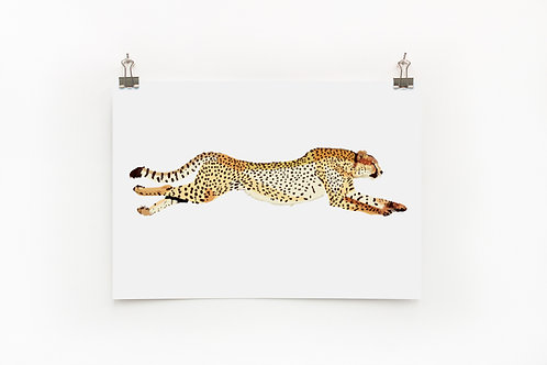 Cheetah  |  Digital Print