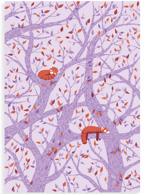 Red Pandas in a tree Postcard