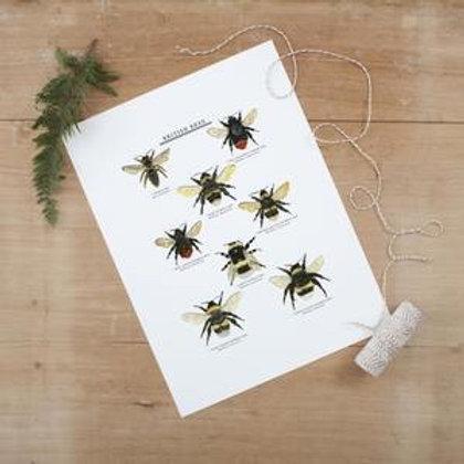 British Bees Giclee Print - 30x40cm (unframed)