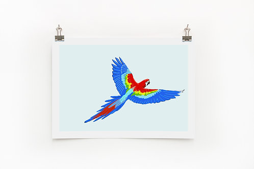 Maccaw Parrot A4 Print