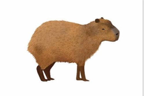 Capybara Postcard