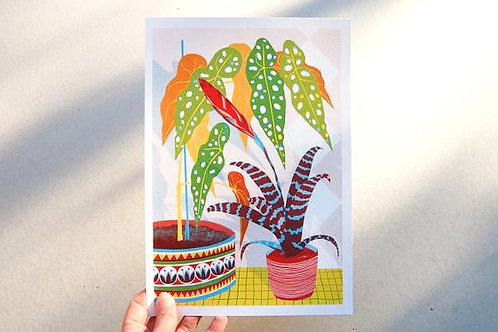 Bromeliad Riso Print -  A4 & A3