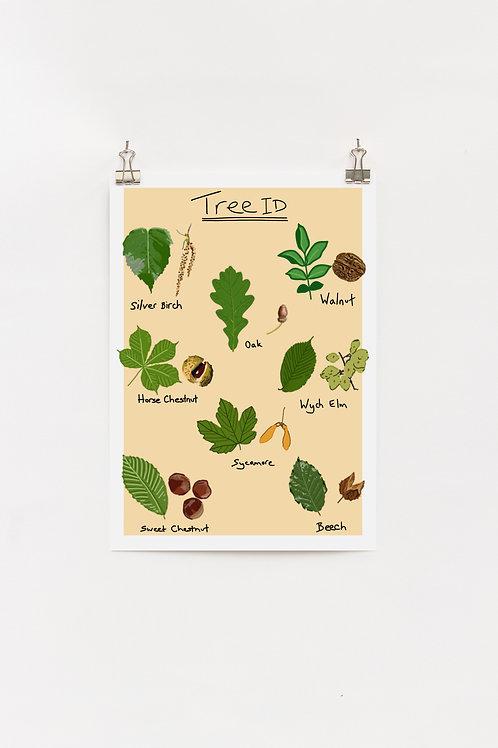 Tree identification A4 Print
