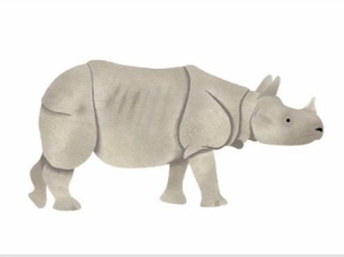 Indian Rhinoceros Postcard