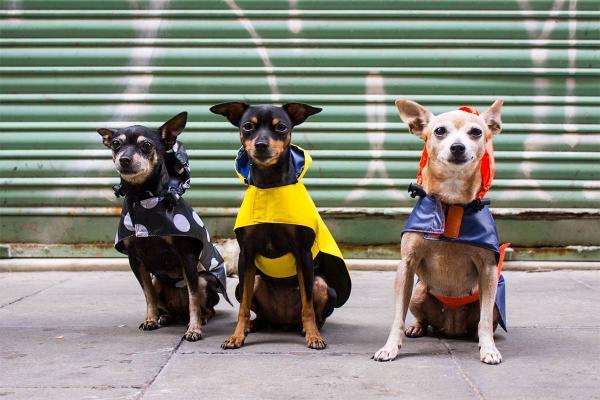 img_7281_caninetto-sastreria-de-mascotas
