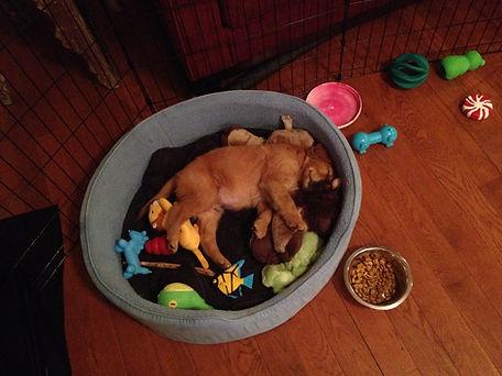 Puppy Amos