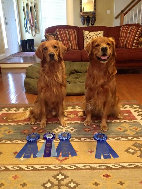 Amos and Mosby Agility Ribbons