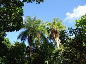consultoria biodiversidade