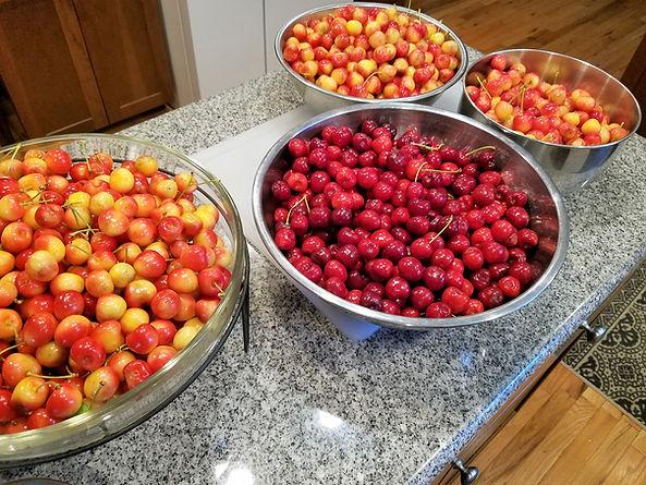 Bing and Rainier Cherries