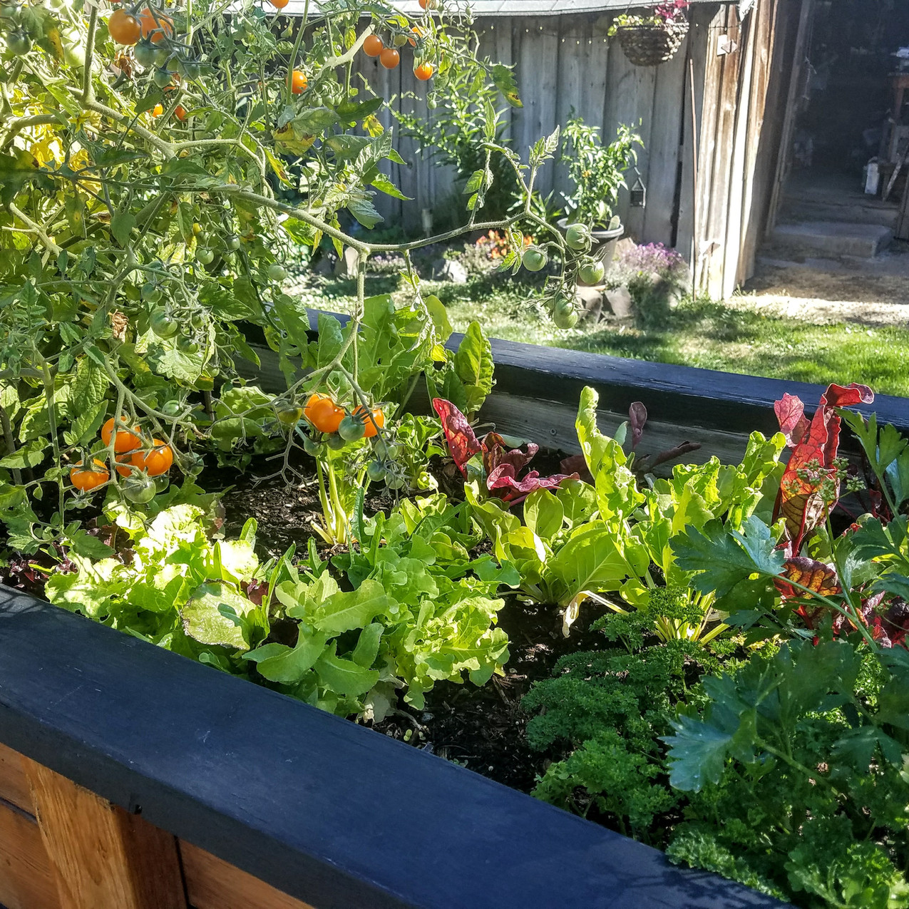 The Raised Bed