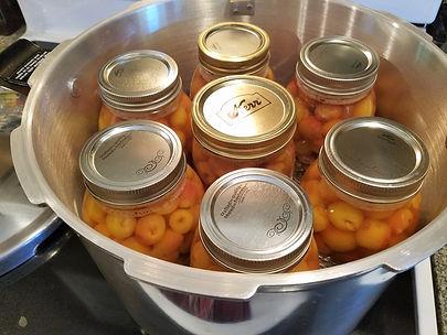 Canned Rainier Cherries