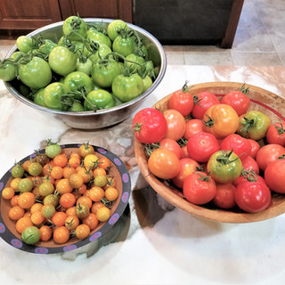 over the next few weeks I will continue to use these fresh and the green ones will ripen sitting along side the ripe ones. Add a banana to the bowl to help them ripen faster if you would like.