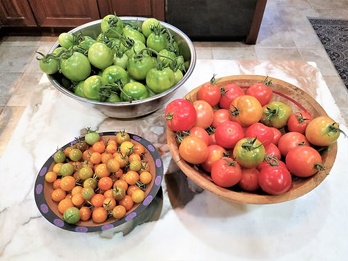 Chunky Green Tomato Picante Sauce