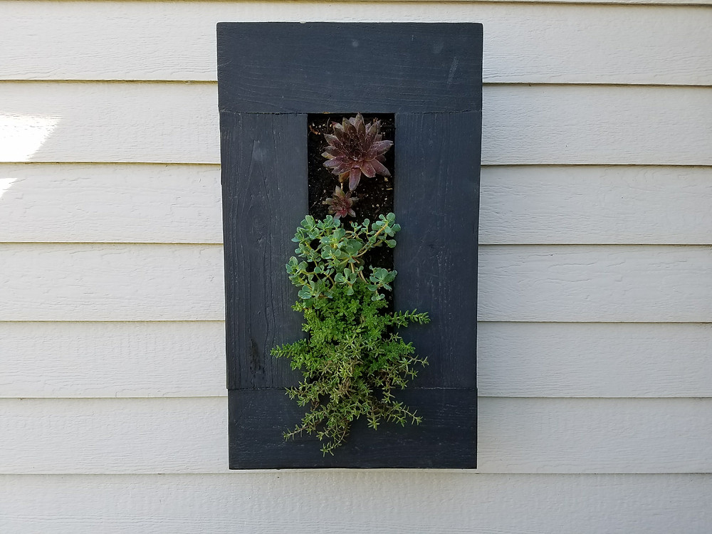 Succulent Wall Hanging Planter