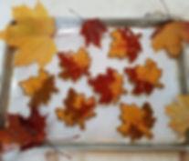 Making Sugar Maple Cookies!__#sugarcooki