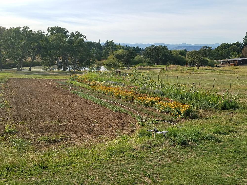 Flower gardens at Dunbar Farms/Rocky Knoll Farm Stand