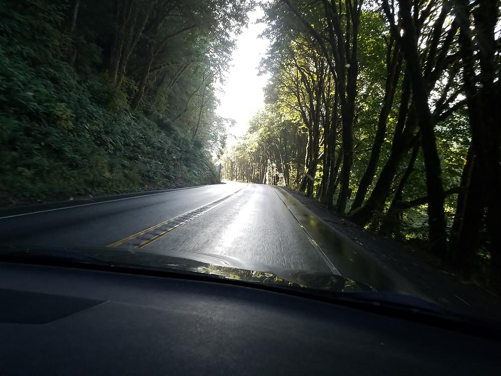 Jason Boe Corridor near Scottsburg, OR