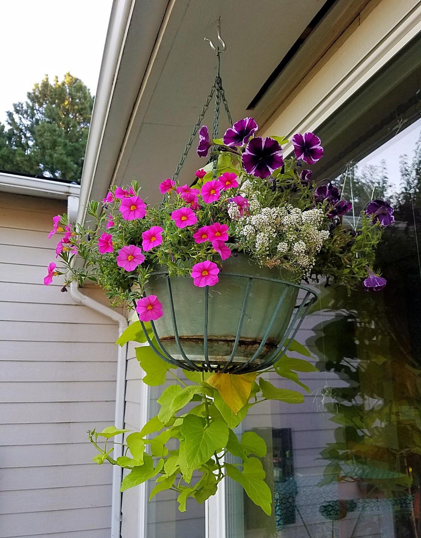 My favorite planter