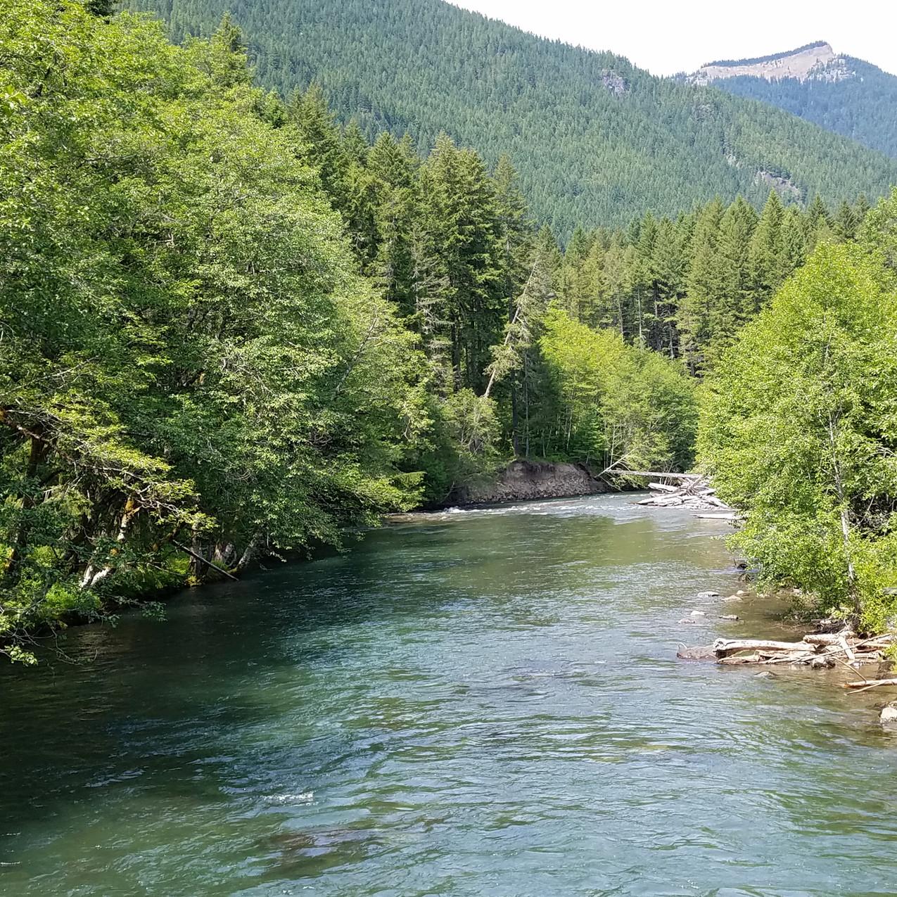 Cispus River NF 21