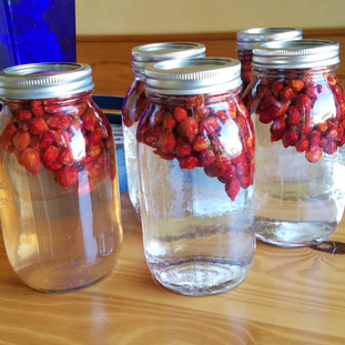 Add the hips to a sterile jar and top with white vinegar.