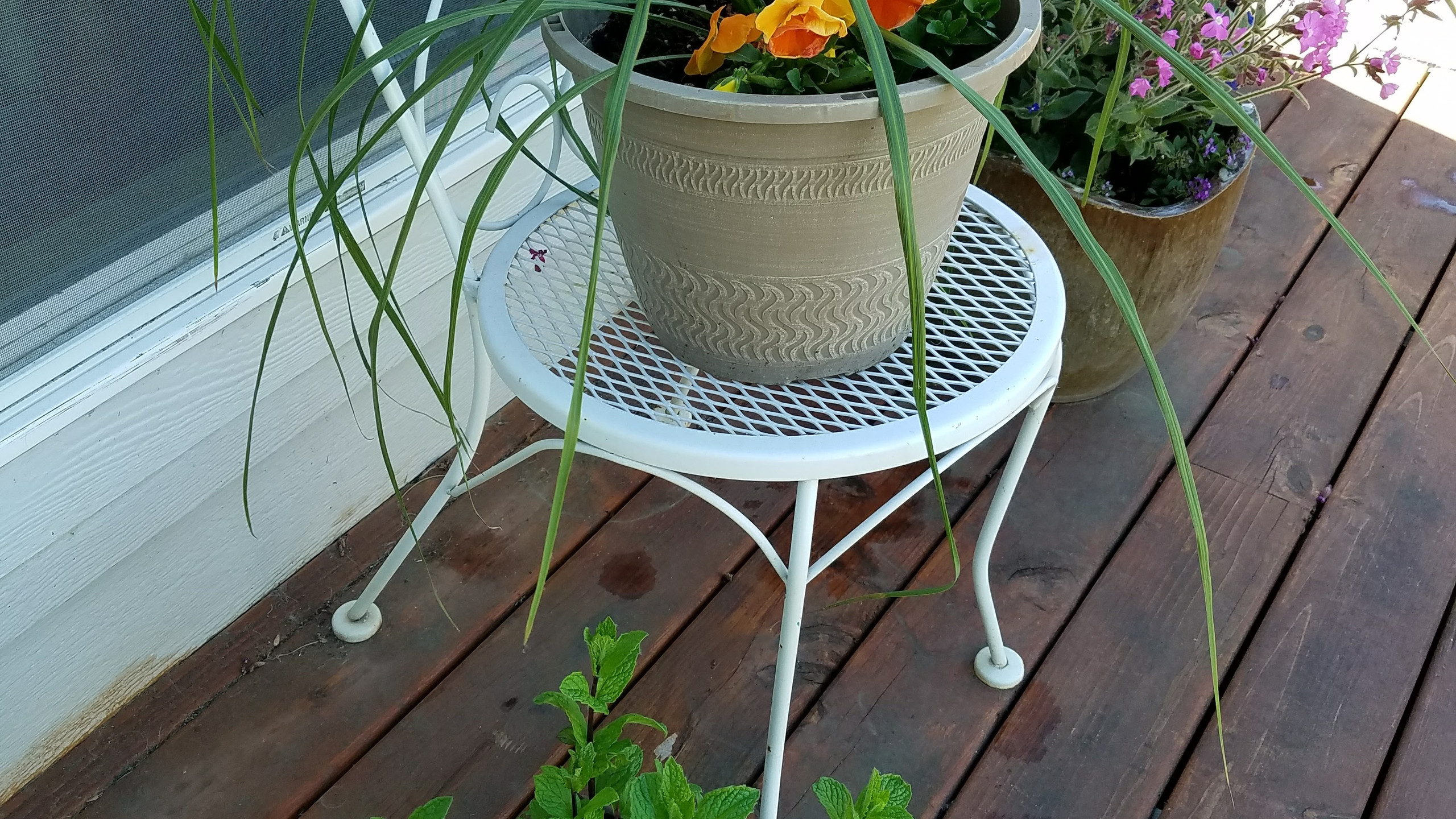 Porch container plantings