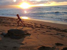Sea Turtle and Sunset on Maui