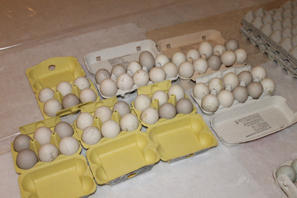 Brutschrank und Eier (56).JPG