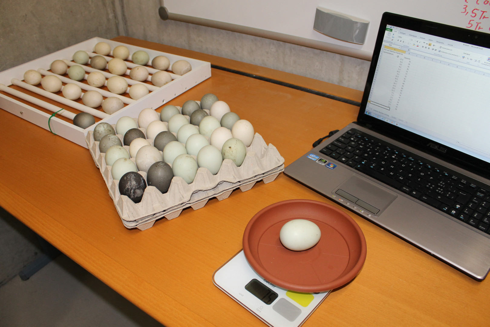 Brutschrank und Eier (131).JPG