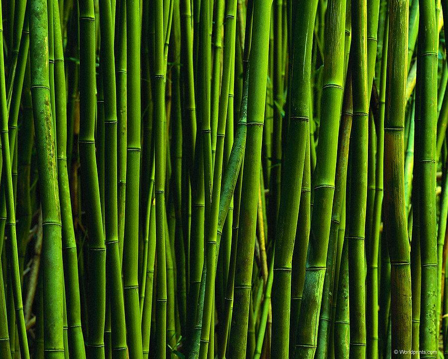 bamboo-art-background.jpg