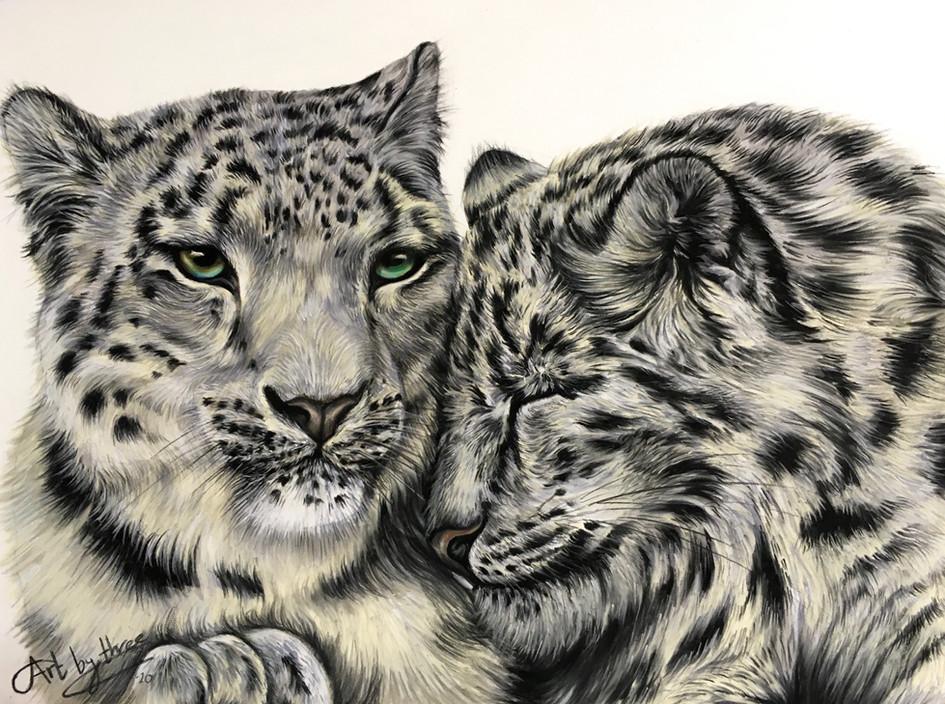 Snow Leopards Love