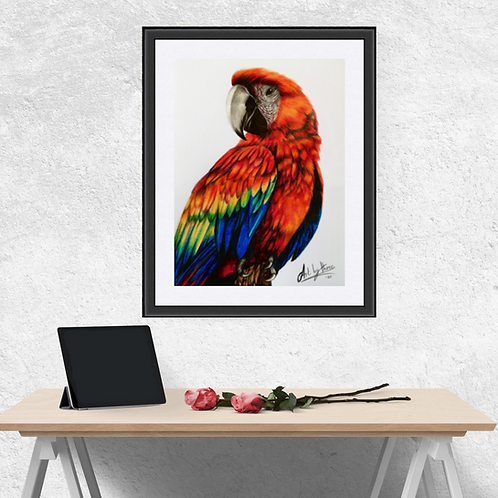Red Macaw Parrot Original Drawing