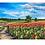 Thumbnail: Poppy Field Original Painting