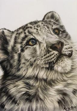 Snow Leopard Cub.jpeg
