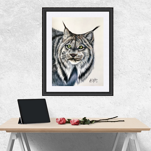 Canadian Lynx Original Drawing
