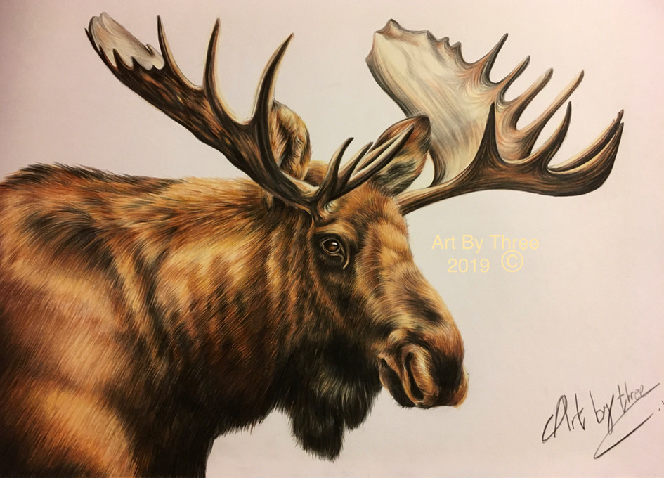 Maurice Moose