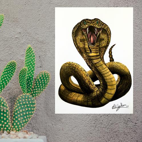 King Cobra Snake Fine Art Print