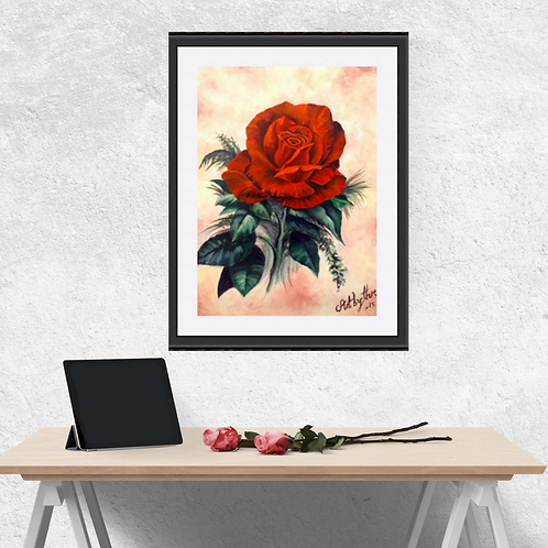 Red Rose In Bloom  Fine Art Print