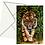 Thumbnail: Bengal Tiger Fine Art Card Blank