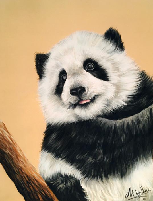 Panda Cub.jpeg