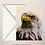 Thumbnail: American Bald Eagle Fine Art Card Blank