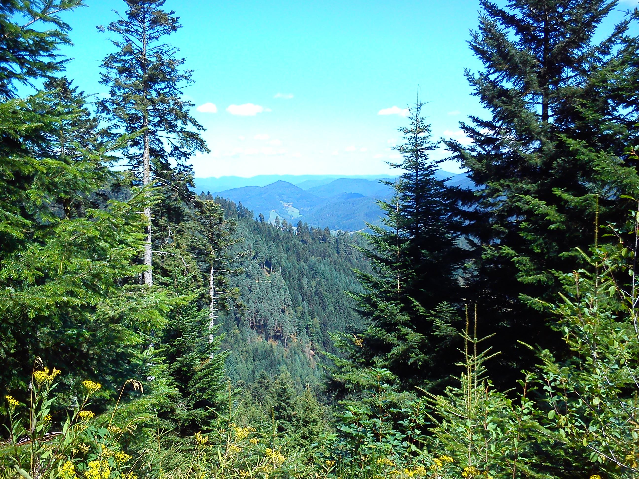Aussicht vom Staufenkopf