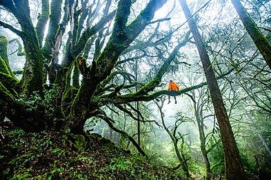 forest-1245692_1920.jpg