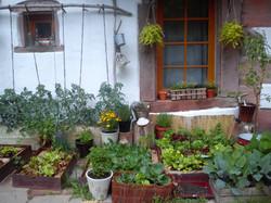 Urban Biogarten