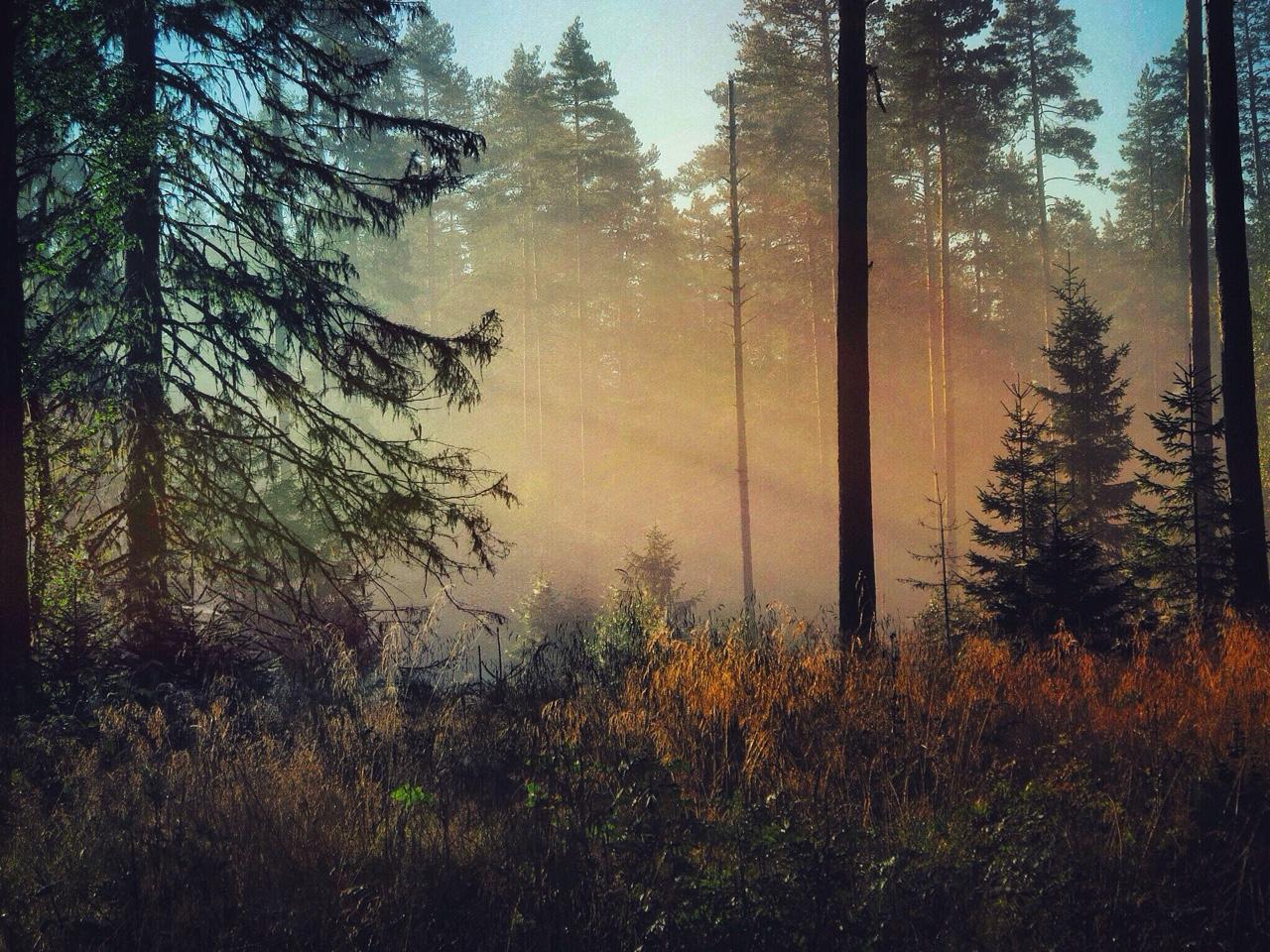 verwunschener Schwarzwald