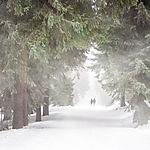 forest-656552_1920.jpg