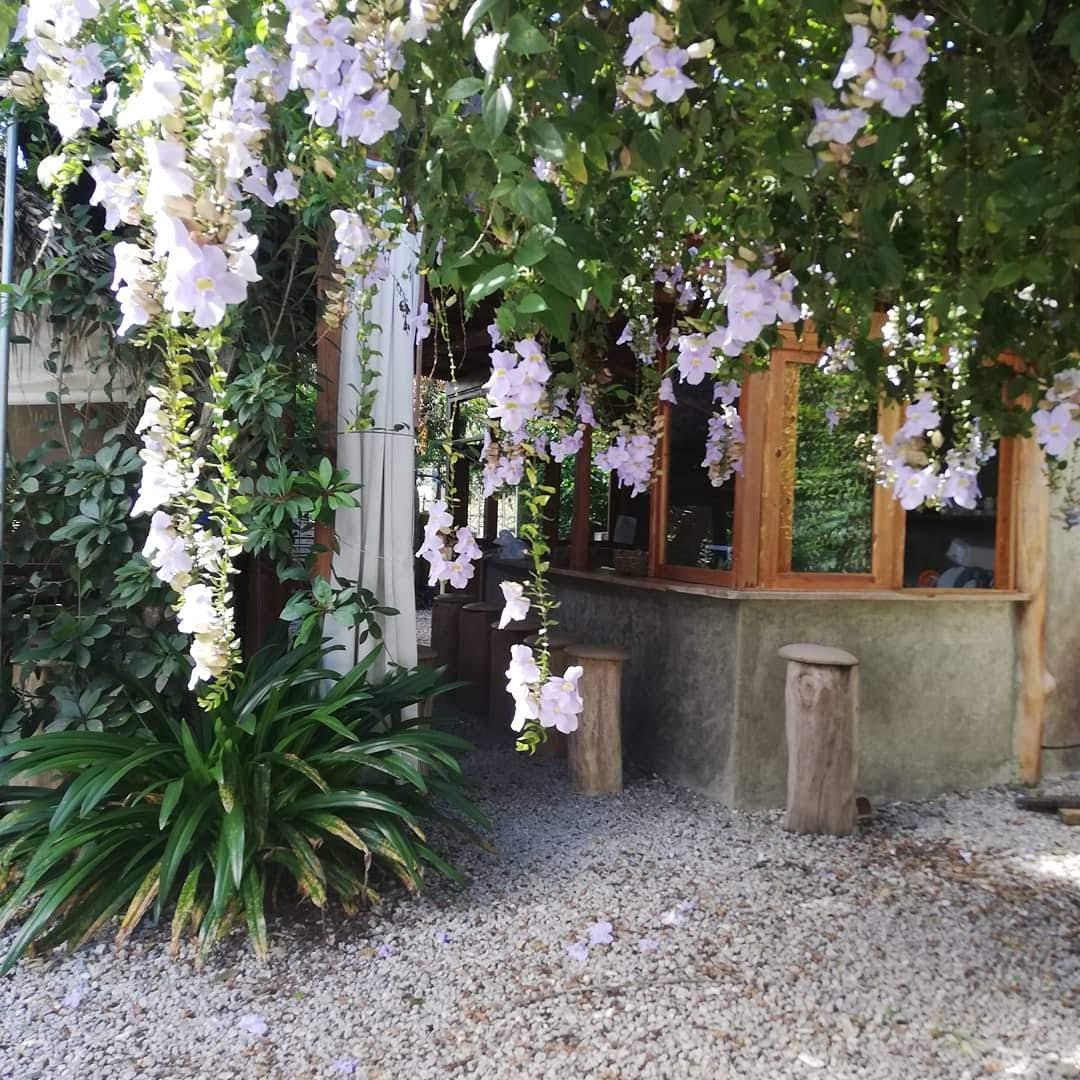 jardin-balata.jpg